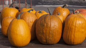 Organic pumpkins Stock Image