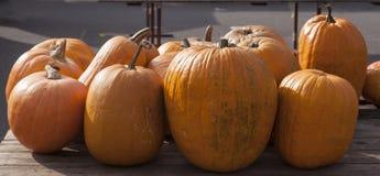 Organic pumpkins Royalty Free Stock Photography