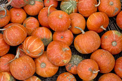 Organic pumpkins Stock Images
