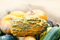 Organic pumpkins variation. Halloween thanksgiving day background. Yellow green orange color vegetables harvest Royalty Free Stock Photos