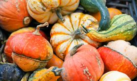 Organic pumpkins variation. Halloween thanksgiving day background. Yellow green orange striped color vegetables harvest Royalty Free Stock Photos