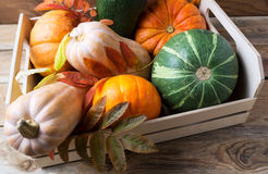 Organic pumpkins in wooden box Stock Image