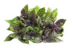 Organic purple basil Stock Photography