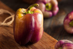 Organic Purple Bell Peppers Stock Photography