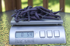 Organic Purple Green Beans On Produce Scale Stock Photos