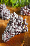 Organic Purple Wine Grapes Stock Image