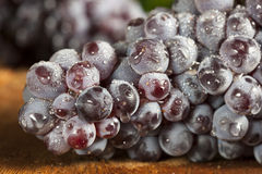 Organic Purple Wine Grapes Royalty Free Stock Images