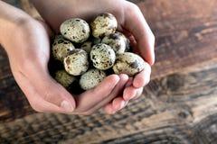 quail bird eggs stock images