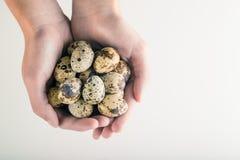 organic quail bird eggs royalty free stock photos