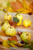 Organic quince (apple quince) Royalty Free Stock Photography