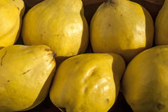 Organic quinces. In wooden bowl as background royalty free stock photography