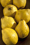 Organic quinces. In wooden bowl as background royalty free stock photo