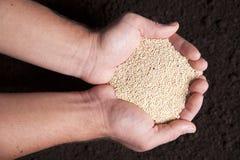 Organic Quinoa Stock Images