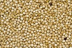 Organic Quinoa Stock Image