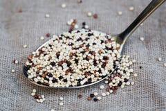 Organic quinoa grain tricolore on spoon, vegan Stock Images