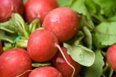 Organic radish Royalty Free Stock Photo