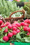Organic radish Royalty Free Stock Images