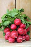 Organic radish Stock Photo