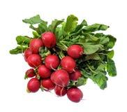 Organic radish Stock Image