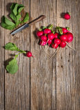 Organic radish without leaves, top view. Top view of pile of fresh radishes on a wooden background Stock Photography