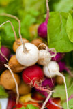 Organic radishes in fresh food market Royalty Free Stock Images