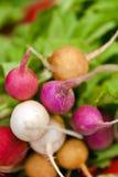 Organic radishes in fresh food market. Organic radishes in Union square Market fresh food market, New York, USA Royalty Free Stock Image