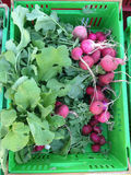 Organic radishes in a produce crate Stock Photography