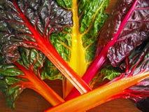 Organic Rainbow Chard. Bright, colorful rainbow chard from the local, organic farm stand Stock Photo