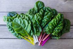 Organic rainbow chard: spray-free leafy greens in fan arrangement on rustic wooden background. Organic rainbow chard: spray-free leafy greens in fan arrangement royalty free stock photography