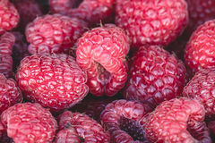 Organic rasberries for sale at a market Stock Photography