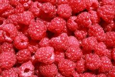 Organic raspberries Stock Photos