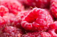 Organic raspberries background Royalty Free Stock Photo