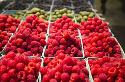 Organic raspberries at Framer's Market Stock Image