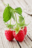 Organic raspberry Stock Image