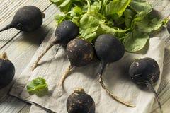 Organic Raw Black Radishes. In a Bunch Stock Photo