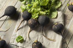 Organic Raw Black Radishes. In a Bunch Royalty Free Stock Photos