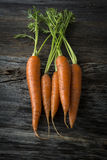 Organic Raw Carrots with Greens royalty free stock images
