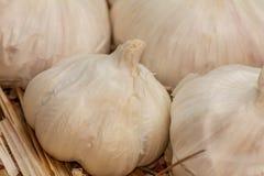 Garlic, Allium sativum. Organic raw garlic bulbs on straw background, Allium sativum Royalty Free Stock Image