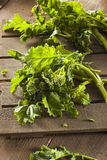 Organic Raw Green Broccoli Rabe Rapini. On a Background royalty free stock images
