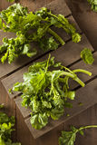 Organic Raw Green Broccoli Rabe Rapini. On a Background stock images