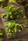Organic Raw Green Broccoli Rabe Rapini. On a Background Stock Photo