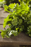 Organic Raw Green Broccoli Rabe Rapini. On a Background royalty free stock photography