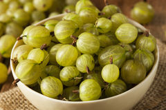 Organic Raw Green Gooseberries Royalty Free Stock Photos