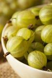 Organic Raw Green Gooseberries Royalty Free Stock Photo