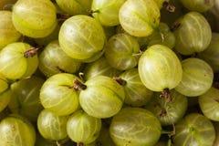 Organic Raw Green Gooseberries Stock Photography