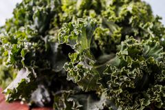 Organic raw kale. Ready for healthy cooking Stock Images