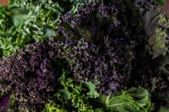 Organic raw kale. Ready for healthy cooking Royalty Free Stock Images