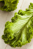 Organic Raw Mustard Greens Royalty Free Stock Images