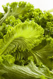Organic Raw Mustard Greens Stock Photos