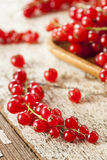 Organic Raw Red Currants Royalty Free Stock Photos